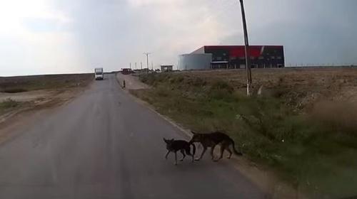 Un perro salva a su amigo de ser atropellado