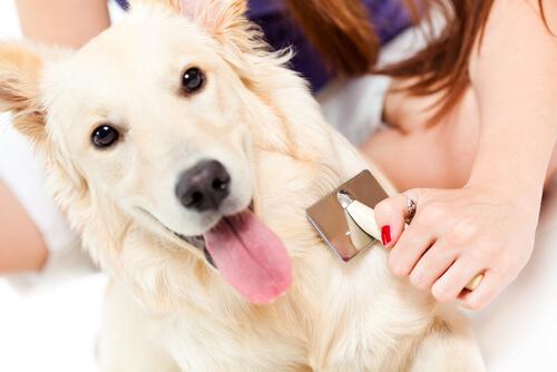 perro y cepillo del pelo