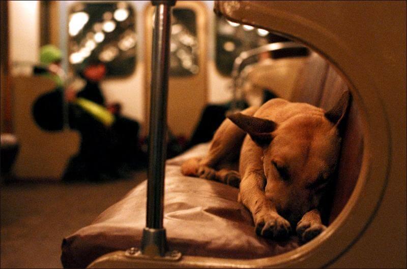 perros-callejeros-metro-moscu