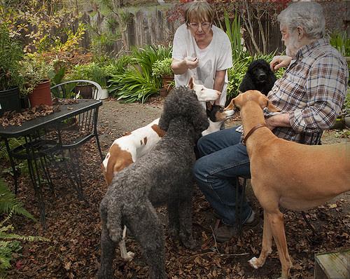 Las 10 formas en que nuestros perros nos demuestran su amor