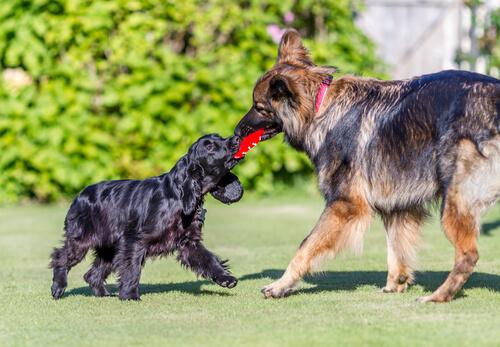perros que juegan