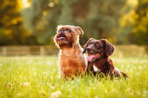 perros que les gusta tomar el sol