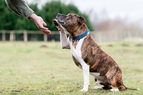 Perros sordos aprenden lenguaje de señas