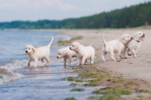 ¿Es importante la socialización del cachorro?