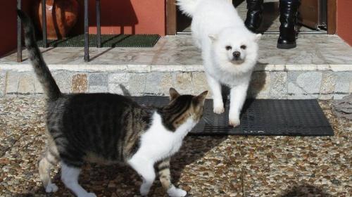 Un perro y dos gatos salvan la vida a una familia