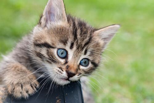 vida secreta de los gatos