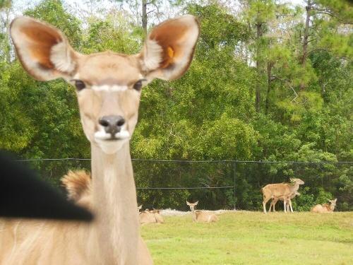 Un safari muy especial con animales que tuvieron una segunda oportunidad