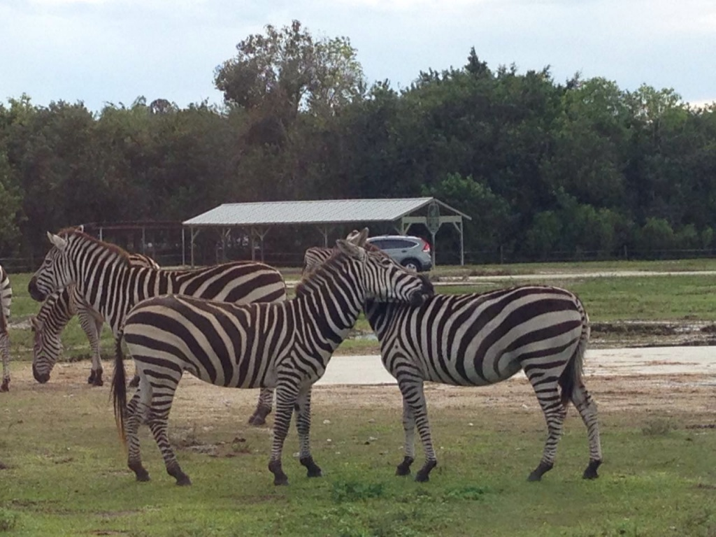Un safari muy especial