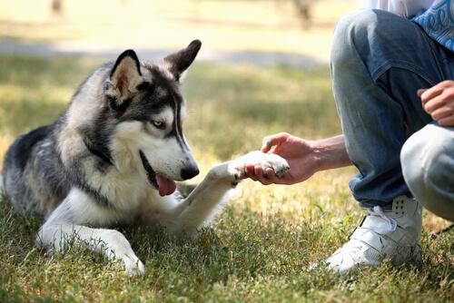 compartir con tu mascota en madrid