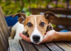 consejo para que los vecinos no odien a tu perro