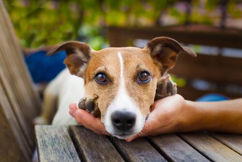 Consejos para que los vecinos no odien a tu perro