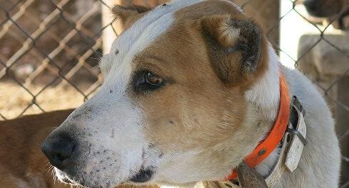 Veterinarios y cazadores detenidos por mutilar perros