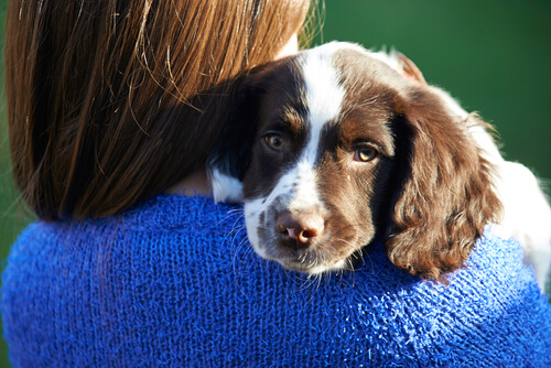 el cancer en tu perro