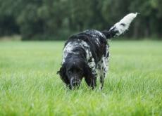 el olfato de tu perro