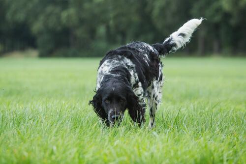 Estimula el olfato de tu perro