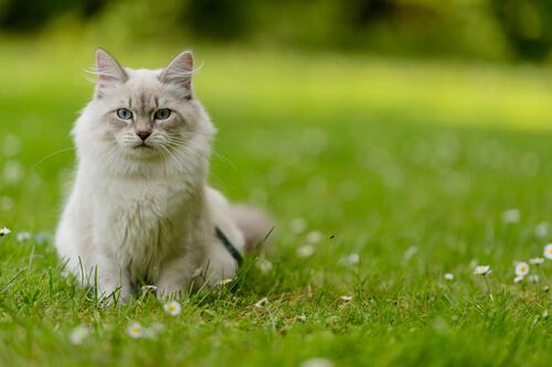 Cómo entender a tu gato
