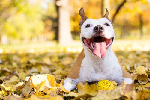 vida feliz com seu cachorro