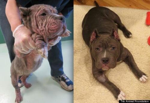 Fotos de perros antes y después de ser rescatados