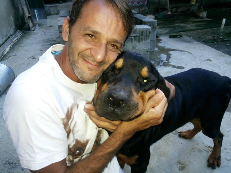 fotos de perros despues2