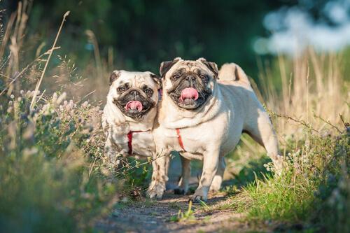 Cómo tratar el problema de gases malolientes en perros