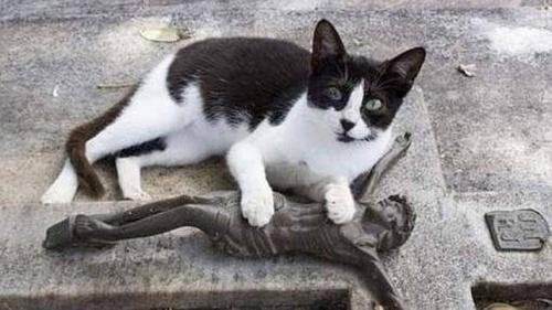 Un gato visita diariamente la tumba de su dueño