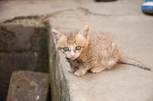 Rescatan gatitos huérfanos atrapados en un conducto del aire