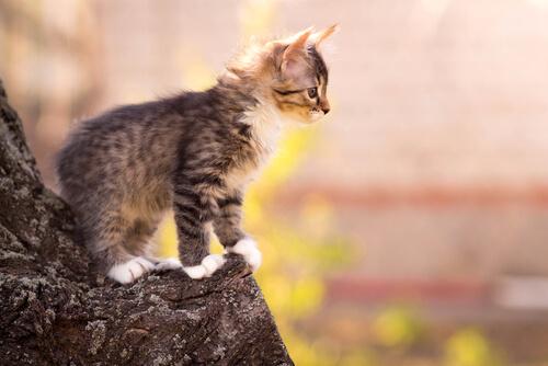 gatos que caen de pie