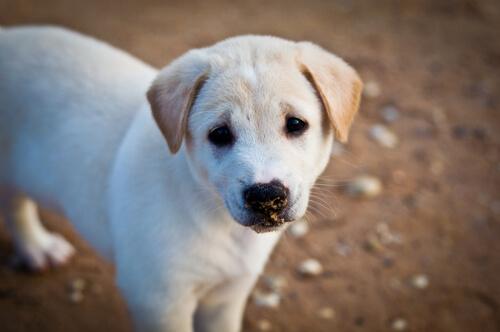 niño cambia su regalo de cumpleaños por comida para perros