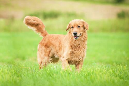 La nobleza de los perros