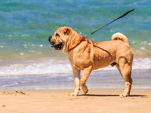 Hoy te enseñamos a elegir un buen paseador para tu perro