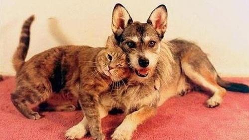Una historia increíble Ginny, la perra que dedicó la vida a salvar gatos