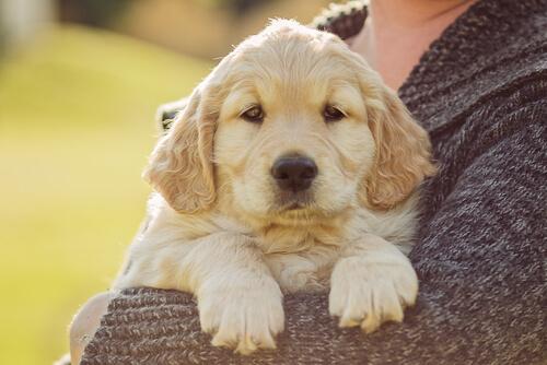 perro, amigo de cuatro patas