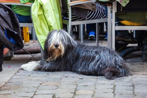 perro en barcelona