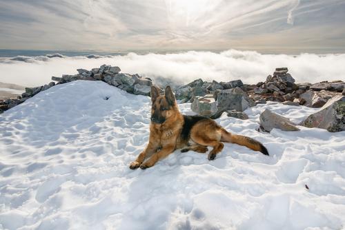 Un perro fue rescatado después de caer en un río congelado en Rusia