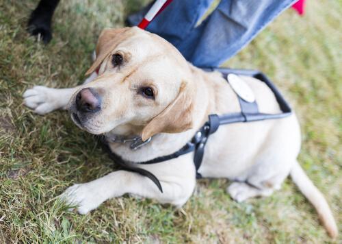 Los perros guía acompañarán a los mayores en las residencias
