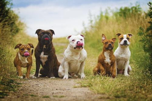 perros en un pueblo