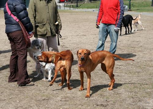 perros expuestos a comer salchichas con alfileres