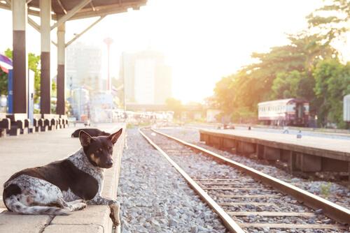 Historias conmovedoras de perros leales hasta el final