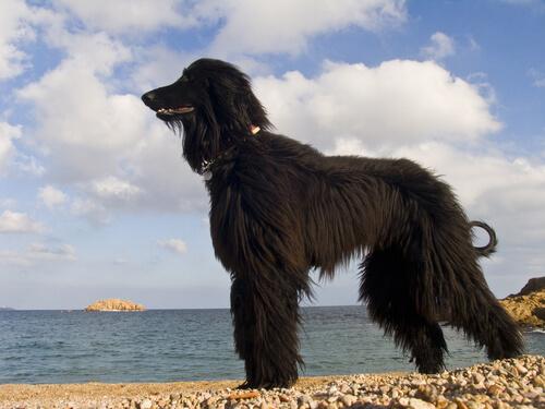 playa para perros en barcelona
