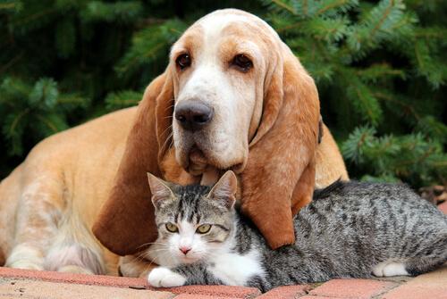 El primer celo de tu mascota: ¿cómo afrontarlo?
