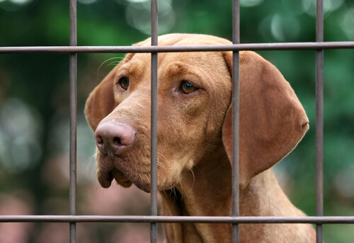 Animales al borde de la muerte en una protectora española