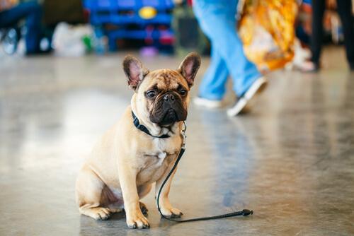 Se crea una app para perros perdidos