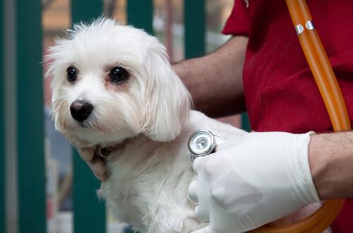 ¿Existen seguros de salud para perros?