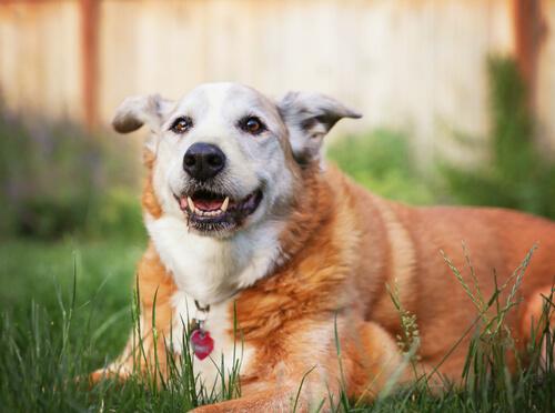 tamaño maximo de tu perro