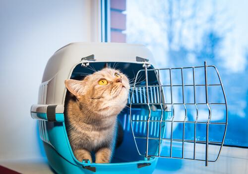 7 вещей, которые следует учитывать при спасении кошки или собаки