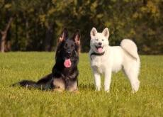 un perro le agrada otro