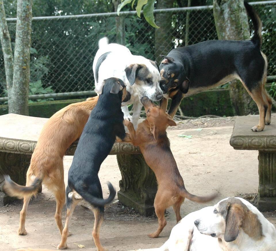 una mujer que cuida de 200 perros 2