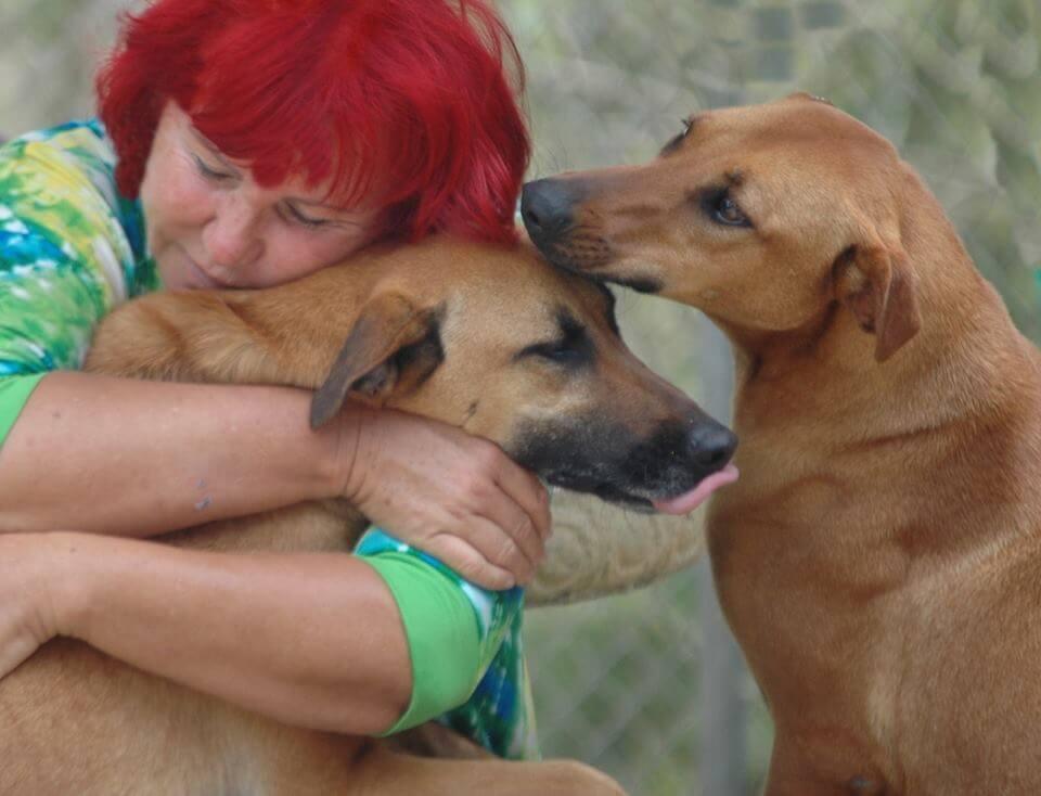 Una mujer en Costa Rica usa todos sus ahorros para cuidar a más de 200 perros abandonados
