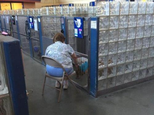 Una señora lee a perros de refugio para que no se sientan solos