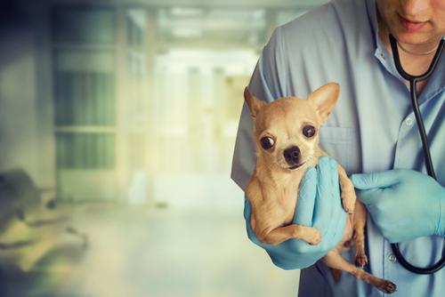 Urgencias veterinarias: ¿gratis en Colombia?